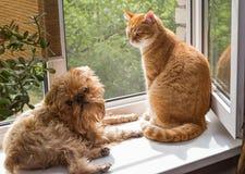 狗和猫在窗口 图库摄影