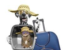 狗和猫在运输箱子旅行 免版税图库摄影