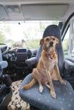 狗和猫在活动房屋 免版税库存图片