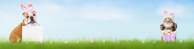 狗和猫复活节半横幅 免版税库存图片