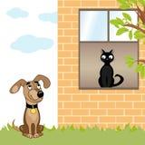 狗和猫家 免版税库存照片
