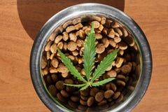 狗和猫的食物纤巧在与大麻特写镜头- CBD和医疗大麻一片绿色叶子的盘宠物的 库存图片
