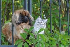 狗和猫 免版税库存照片
