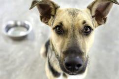 狗和碗 免版税库存图片