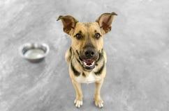 狗和碗 库存图片