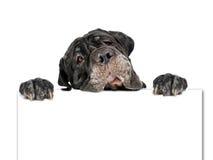 狗和纸板。 库存图片