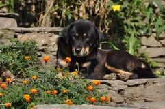狗和花在阳光下 库存照片