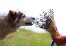 狗和花花束 库存图片