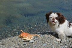 狗和螃蟹 免版税库存图片