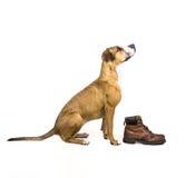 狗和起动 免版税库存照片