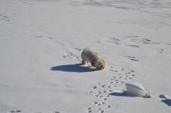 狗和雪 免版税库存图片