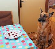 狗和香肠 免版税库存照片