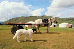 狗和马在蒙古yurts前面 库存图片