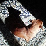 狗和阴影 图库摄影