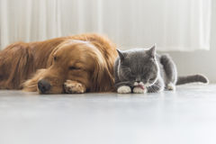 狗和A猫一起偎依 免版税库存照片