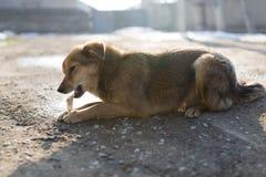 狗咬一根骨头本质上 库存照片