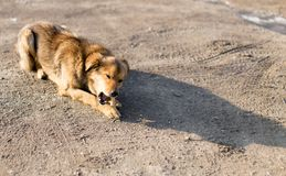 狗咬一根骨头本质上 库存图片