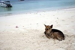 狗哀伤的沙子 免版税库存图片