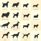 狗品种象集合 免版税库存照片