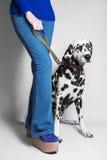 狗品种达尔马提亚狗和女孩 免版税库存照片