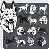 狗品种-传染媒介集合 免版税库存照片