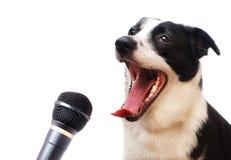 狗唱歌 免版税库存图片