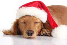 狗困的圣诞老人 免版税库存图片