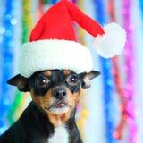 狗圣诞老人 免版税库存照片