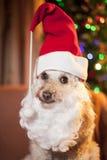 狗圣诞老人 库存照片
