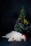 狗圣诞老人 图库摄影