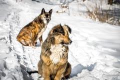 狗在一个多雪的森林里 图库摄影