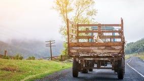 狗在一辆老卡车背后坐 免版税库存图片
