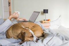 狗在与人的床上 免版税库存照片