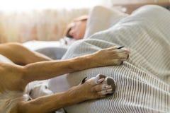 狗在与人的床上 库存图片