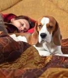 狗在与女主人的床上睡觉 免版税图库摄影