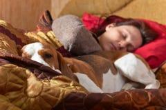 狗在与女主人的床上睡觉 库存图片