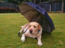 狗在伞下 免版税库存照片