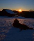 狗在冬天享受日落 免版税图库摄影