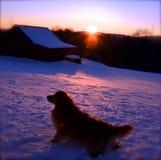 狗在冬天享受日落 库存照片