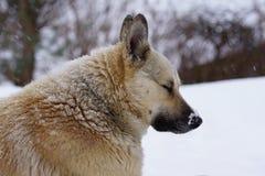 狗在冬天,雪坐并且追悼,友谊 库存图片