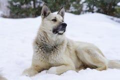 狗在冬天,雪坐并且追悼,友谊 免版税库存照片