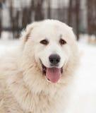 狗在冬天 免版税库存照片