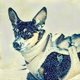 狗在冬天 免版税库存图片