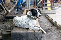 狗在列车车库 免版税库存图片