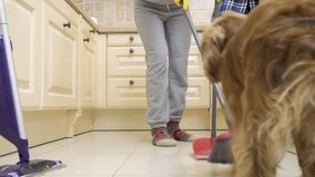 狗在厨房里防止一位主妇清洗地板 股票视频