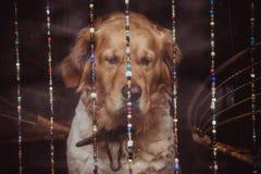 狗在周庄古老房子里  库存照片