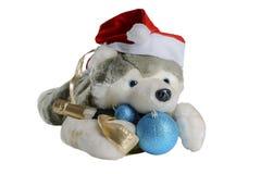 狗在圣诞老人帽子等待的圣诞节,在白色背景的孤立 库存照片