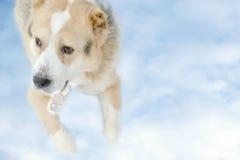 狗在天堂 图库摄影