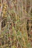 狗在干草上升了 免版税库存照片