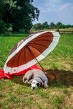 狗在度假 免版税库存图片